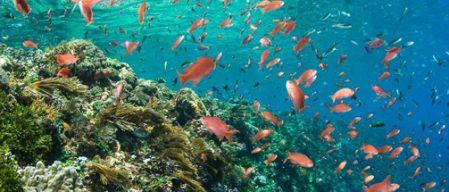 3b3bcdda7ad61 8 maneiras eco-friendly de proteger o oceano!